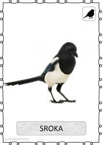 ptak11