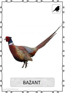 ptak14