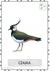 ptak21