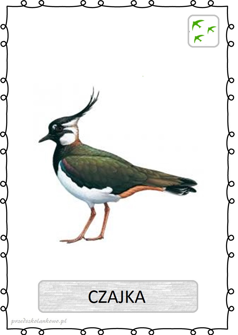 Ptaki Plansze Zestaw 2 Przedszkolankowo