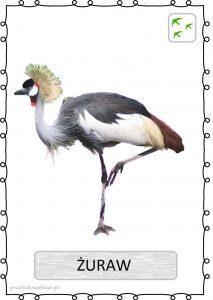 ptak22