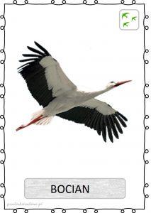 ptak23