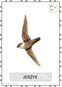 ptak24