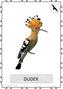 ptak6