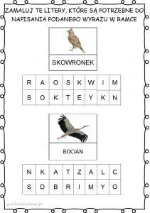 ptakii1