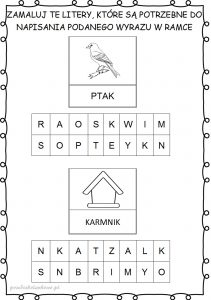 ptakii3