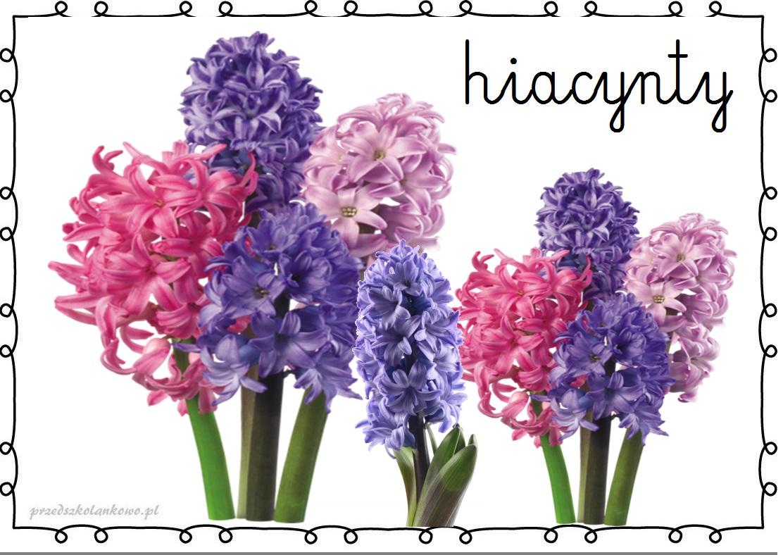 http://przedszkolankowo.pl/wp-content/uploads/2017/01/kwiaty9.jpg