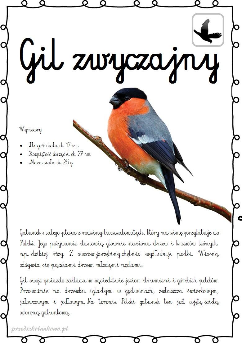 Ptaki Plansze Zestaw 3 Przedszkolankowo