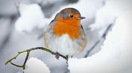 Wiersze O Ptakach Zima Przedszkolankowo